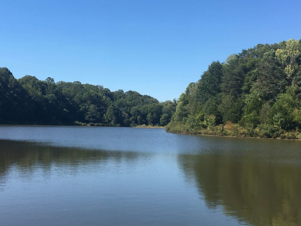Serene picture of a lake with woods in the background.