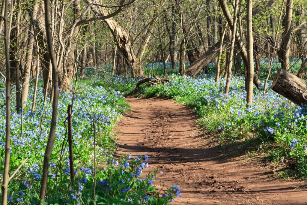 A walking trail with a dirt path, blooming flowers on either side and trees in the background.